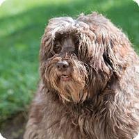 Adopt A Pet :: Hershey - Alexandria, KY