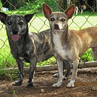 Adopt A Pet :: KAYCE & LISELLE - Rutherfordton, NC