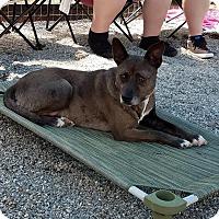 Adopt A Pet :: Louisiana (Lou) - Macon, GA