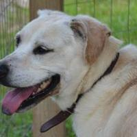 Adopt A Pet :: Zach - Greensboro, NC