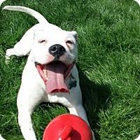 Adopt A Pet :: Neveah - Lorain, OH