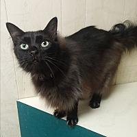 Adopt A Pet :: Dallas - Fairbury, NE