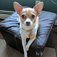 Adopt A Pet :: Fruffy - in Maine - kennebunkport, ME