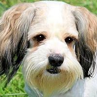 Adopt A Pet :: HEIDI (SO SAD- PLEASE READ!! - Wakefield, RI