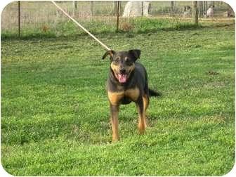 Labrador Retriever Mix Dog for adoption in Greenville, Rhode Island - Thursday