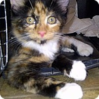 Adopt A Pet :: Kiya - Escondido, CA