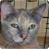 Adopt A Pet :: Swirly - Orlando, FL