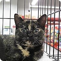 Adopt A Pet :: Rosebud - Port Republic, MD