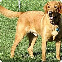 Adopt A Pet :: Benji - Courtesy Posting - New Canaan, CT
