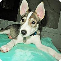 Adopt A Pet :: Aika - Knoxville, TN