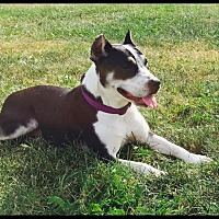 Adopt A Pet :: Gypsy - Middletown, OH