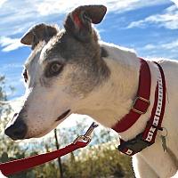 Adopt A Pet :: Dorothy( Dot Dot) - Tucson, AZ