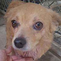 Adopt A Pet :: Foxx - Santa Rosa, CA