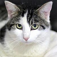 Adopt A Pet :: Tiny Tim - Bedford, VA
