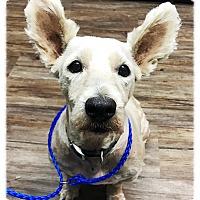 Adopt A Pet :: Gambit - Los Alamitos, CA