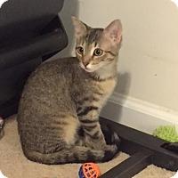 Adopt A Pet :: Jade - Stafford, VA