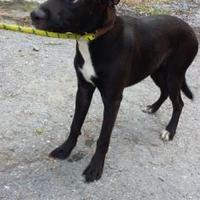 Adopt A Pet :: Leeba - Kinston, NC