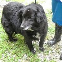 Adopt A Pet :: Lark - Rexford, NY