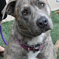 Adopt A Pet :: Hazel - San Diego, CA