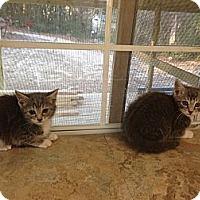 Adopt A Pet :: Tom & Jerry - Aiken, SC