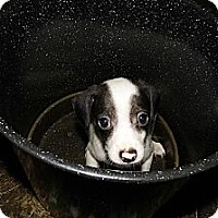 Adopt A Pet :: Twist - Bel Air, MD