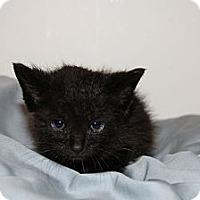 Adopt A Pet :: Roar - Austin, TX
