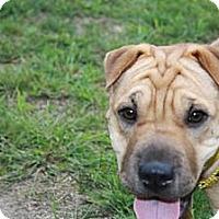Adopt A Pet :: Mandy - Newport, VT