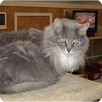 Adopt A Pet :: Piper - Kingston, WA