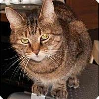 Adopt A Pet :: B B - Milford, OH