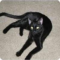 Adopt A Pet :: Raven - Davis, CA