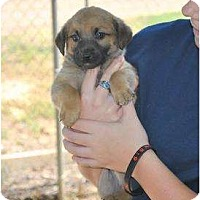 Adopt A Pet :: Magnus - New Boston, NH