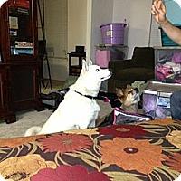 Adopt A Pet :: Timber - Westerville, OH
