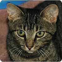 Adopt A Pet :: Hildie - Warminster, PA