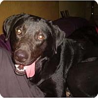 Adopt A Pet :: Cash - North Jackson, OH