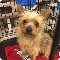 Adopt A Pet :: Petra - Gainesville, FL