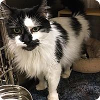 Adopt A Pet :: Noah - Colmar, PA