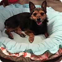 Adopt A Pet :: Bree - Marietta, GA