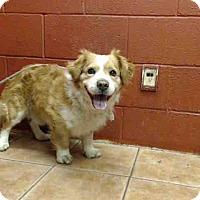 Adopt A Pet :: Laker - Lomita, CA