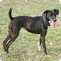 Adopt A Pet :: Tessa - Lufkin, TX