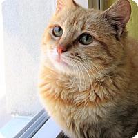 Adopt A Pet :: Butterscotch - Jackson, NJ
