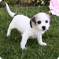 Adopt A Pet :: AZALEA - Newport Beach, CA
