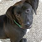 Adopt A Pet :: Ann Marie