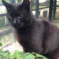 Adopt A Pet :: Sam - Ravenel, SC