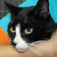 Adopt A Pet :: Lacy - Robinson, IL