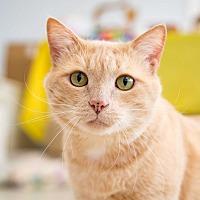 Adopt A Pet :: Gimli - Stafford, VA
