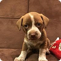 Adopt A Pet :: Mona - Garland, TX