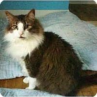 Adopt A Pet :: Jazz - Bartlett, TN