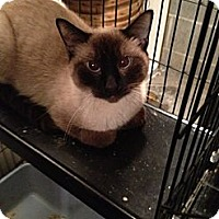 Adopt A Pet :: Hop - Wenatchee, WA