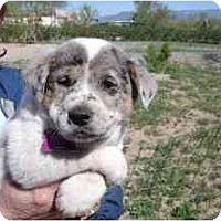 Adopt A Pet :: Joker *Adopted* - Phoenix, AZ