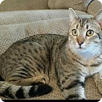 Adopt A Pet :: Bobble Wobble - Columbus, GA